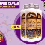 Jual Caviar Shampo Penumbuh Rambut Botak di Teluk Bintuni